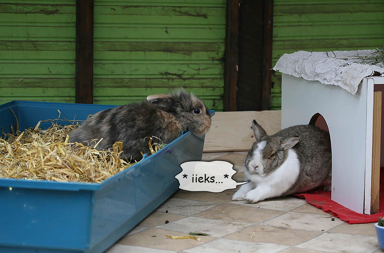 Paulinchen und Lissy am ersten Tag ihrer Vergesellschaftung